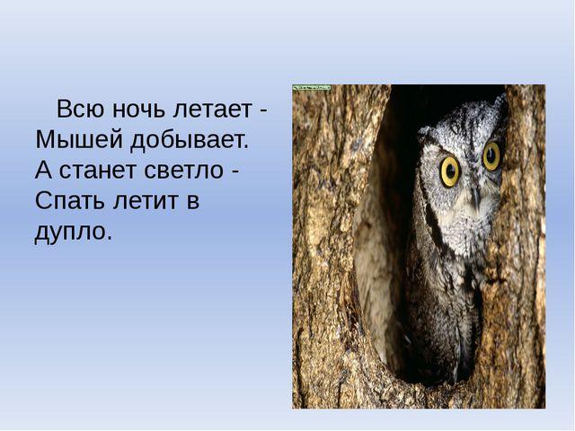 Всю ночь летает - Мышей добывает. А станет светло - Спать летит в дупло.