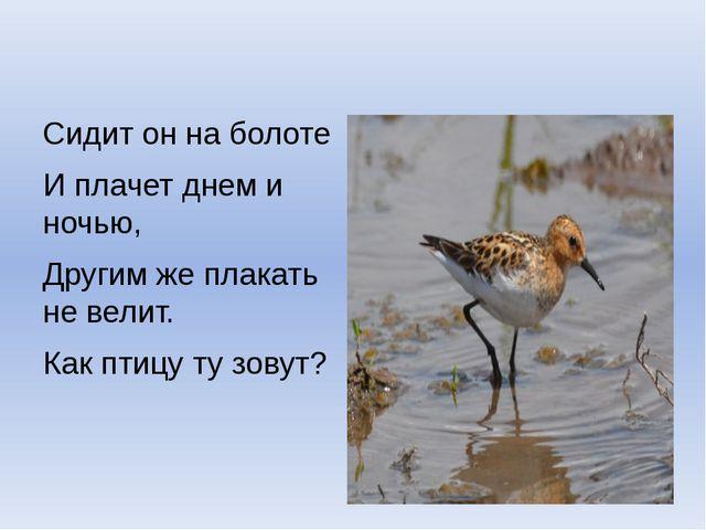Сидит он на болоте И плачет днем и ночью, Другим же плакать не велит. Как пт...