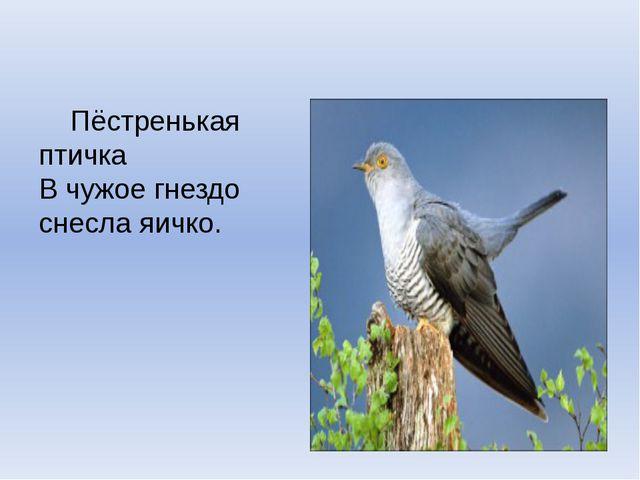 Пёстренькая птичка В чужое гнездо снесла яичко.