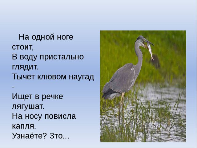На одной ноге стоит, В воду пристально глядит. Тычет клювом наугад - Ищет...