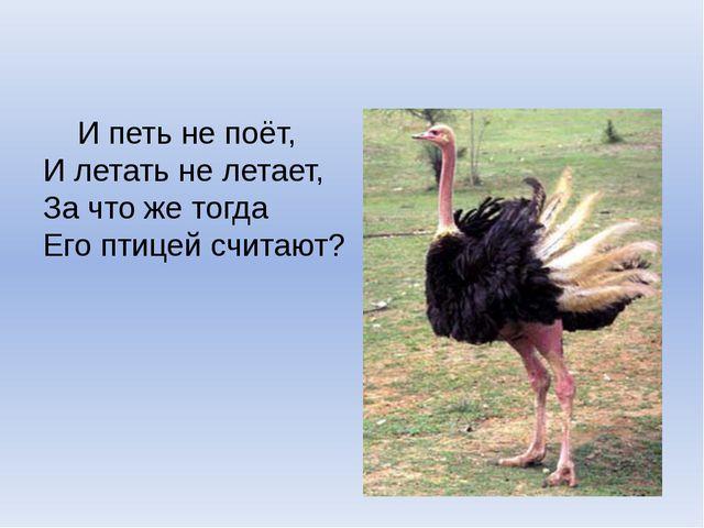 И петь не поёт, И летать не летает, За что же тогда Его птицей считают?