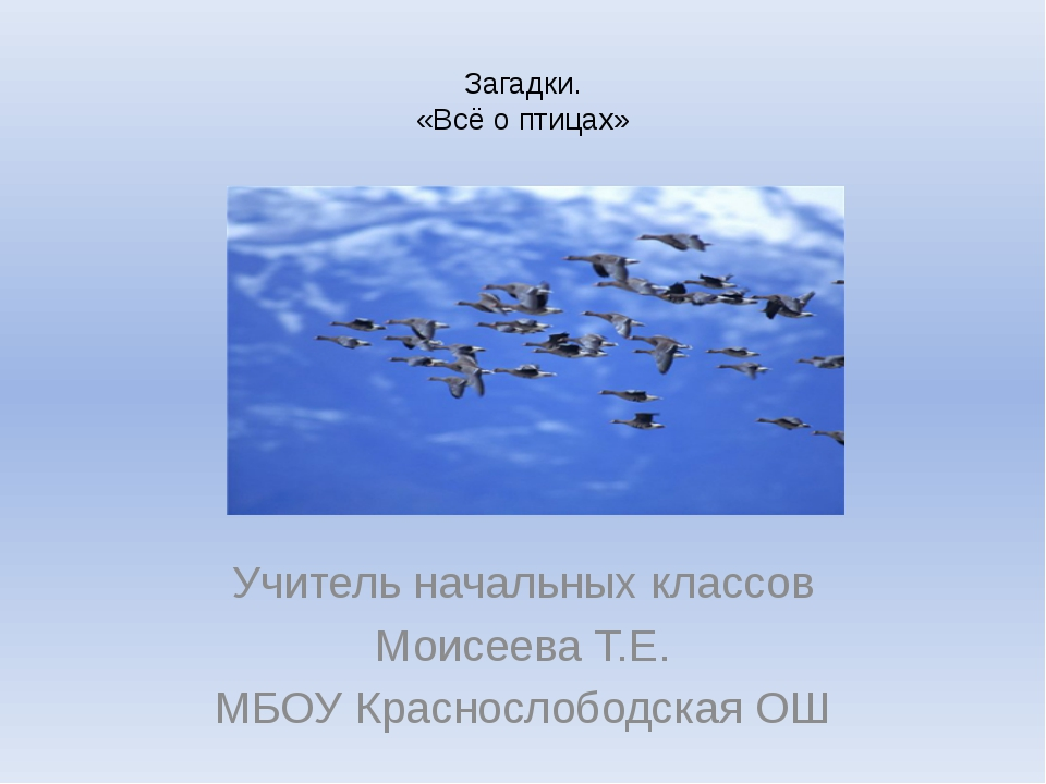 Загадки. «Всё о птицах» Учитель начальных классов Моисеева Т.Е. МБОУ Краснос...