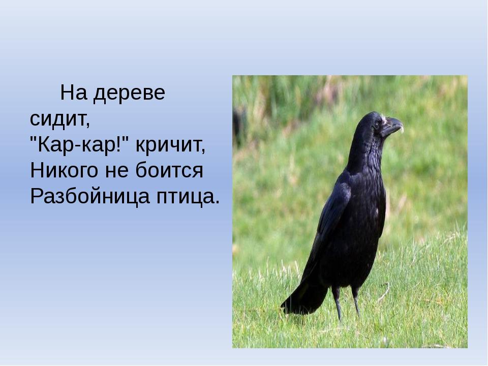 "На дереве сидит, ""Кар-кар!"" кричит, Никого не боится Разбойница птица."