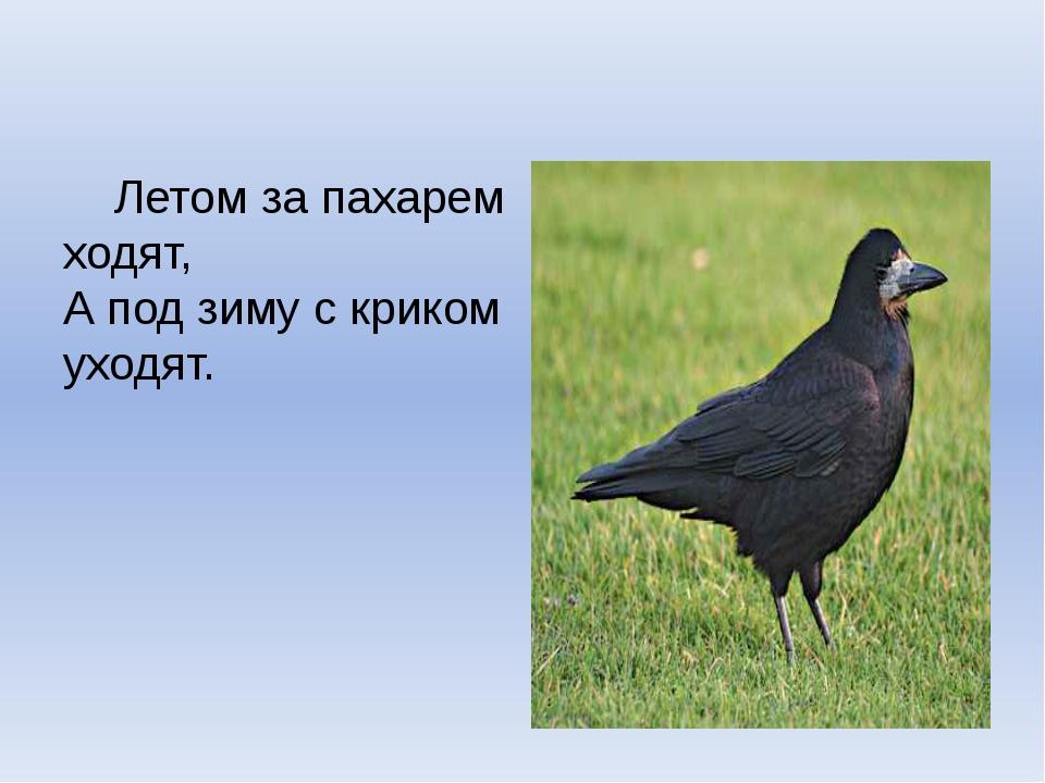 Летом за пахарем ходят, А под зиму с криком уходят.