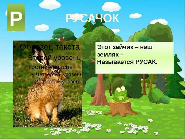 РУСАЧОК Этот зайчик – наш земляк – Называется РУСАК. Р