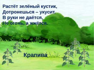 Растёт зелёный кустик, Дотронешься – укусит. В руки не даётся, Не огонь, а жж