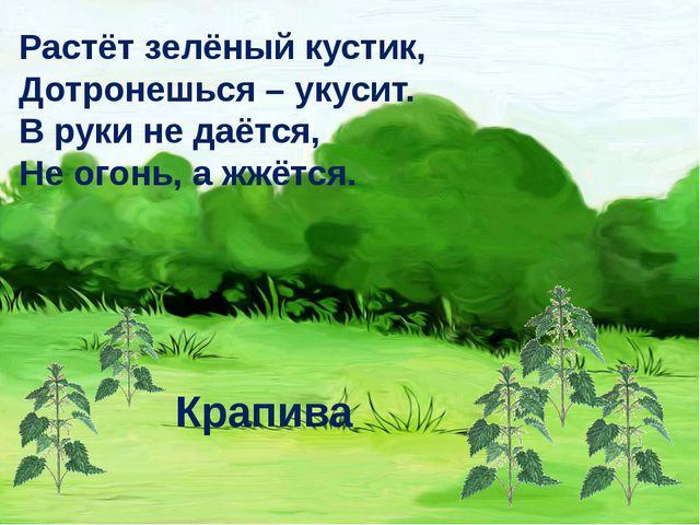 Растёт зелёный кустик, Дотронешься – укусит. В руки не даётся, Не огонь, а жж...