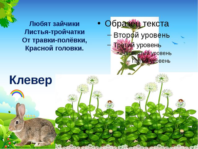 Любят зайчики Листья-тройчатки От травки-полёвки, Красной головки. Клевер