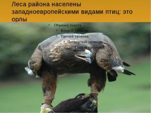Леса района населены западноевропейскими видами птиц: это орлы