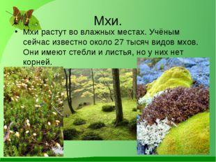 Мхи. Мхи растут во влажных местах. Учёным сейчас известно около 27 тысяч видо