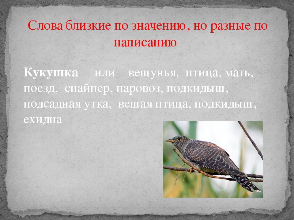 Слова близкие по значению, но разные по написанию Кукушка или вещунья, птица...