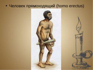 Человек прямоходящий (homo erectus)