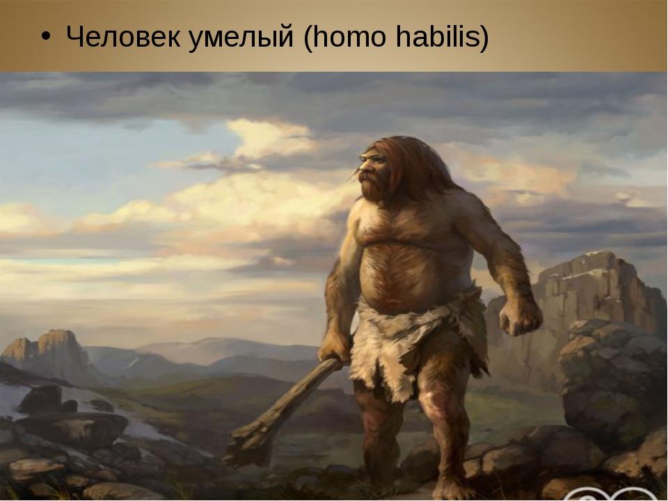 Человек умелый (homo habilis)