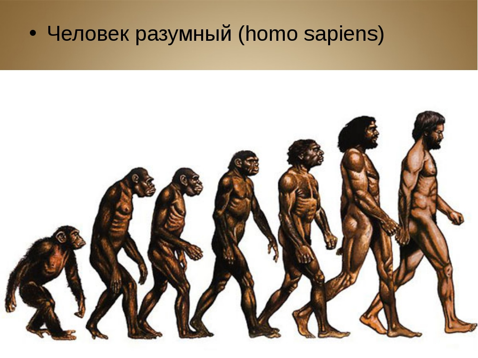a look at major theories explaining the human evolutionary history