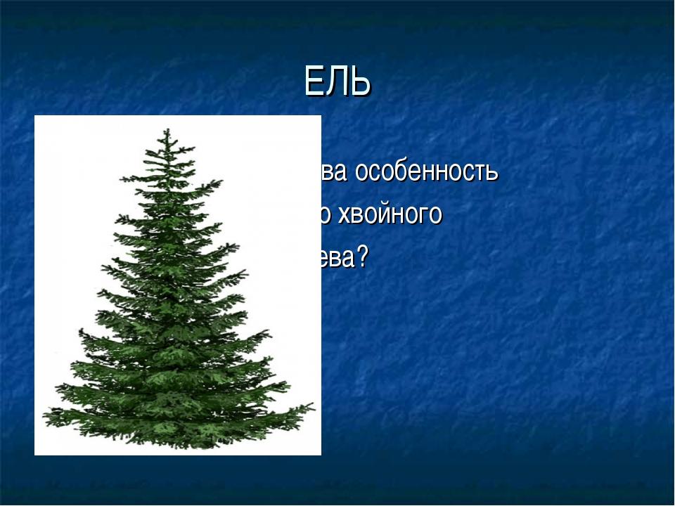ЕЛЬ Какова особенность этого хвойного дерева?