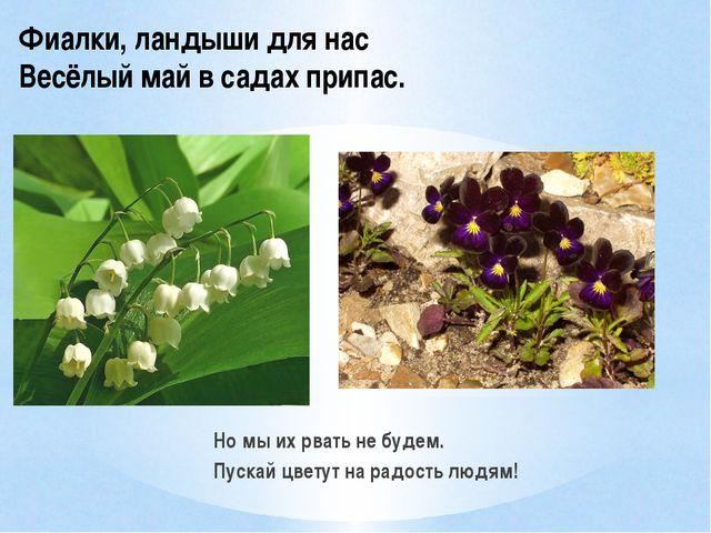 Но мы их рвать не будем. Пускай цветут на радость людям! Фиалки, ландыши для...
