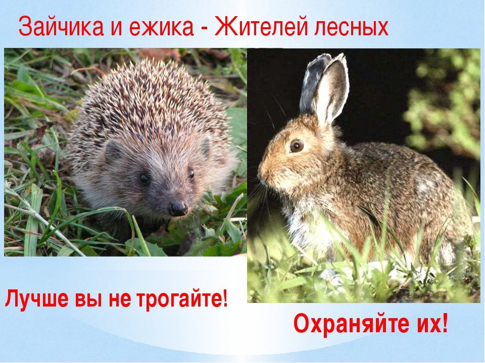Охраняйте их! Зайчика и ежика - Жителей лесных Лучше вы не трогайте!