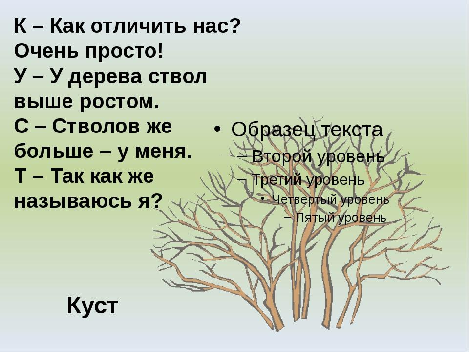 Куст К – Как отличить нас? Очень просто! У – У дерева ствол выше ростом. С –...