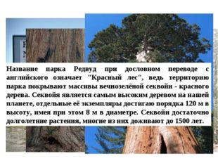 «Редвуд» Название парка Редвуд при дословном переводе с английского означает