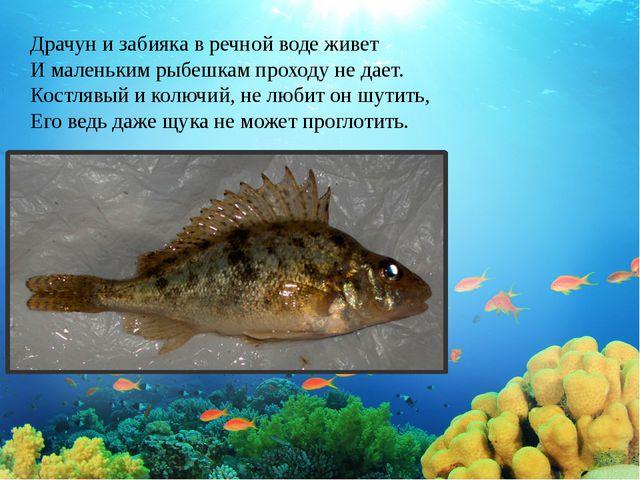 Драчун и забияка в речной воде живет И маленьким рыбешкам проходу не дает. Ко...