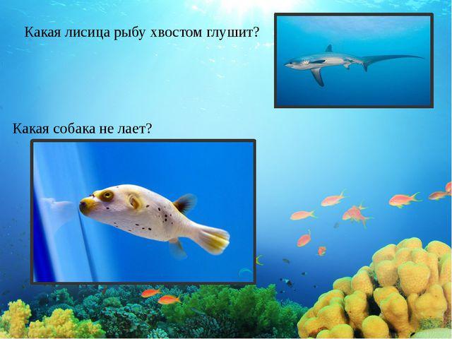 Какая лисица рыбу хвостом глушит? Какая собака не лает?