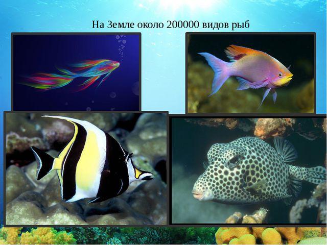 На Земле около 200000 видов рыб