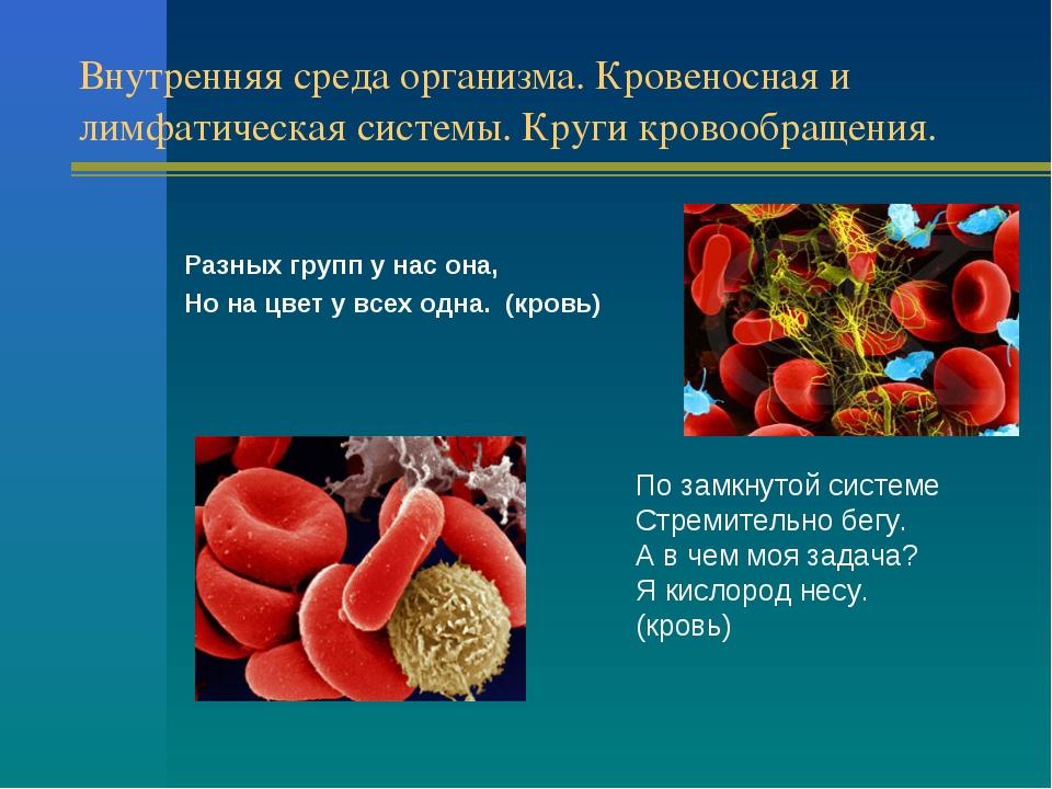Внутренняя среда организма. Кровеносная и лимфатическая системы. Круги кровоо...