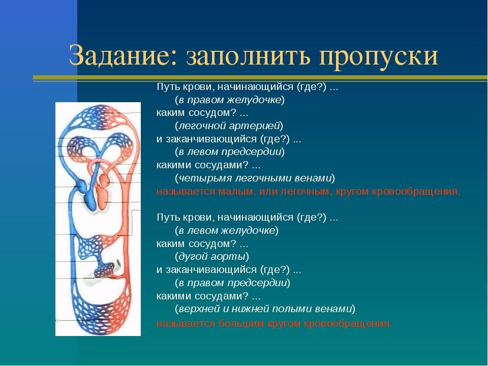 Задание: заполнить пропуски Путь крови, начинающийся (где?) ... (в правом же...