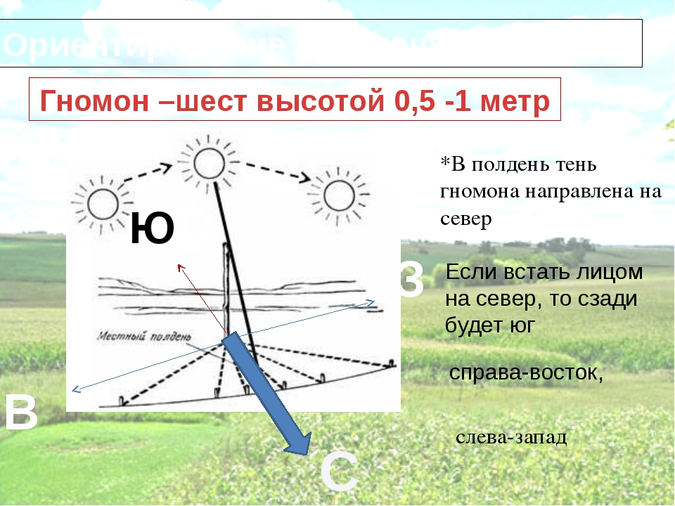 Ориентирование с помощью гномона Гномон –шест высотой 0,5 -1 метр *В полдень...