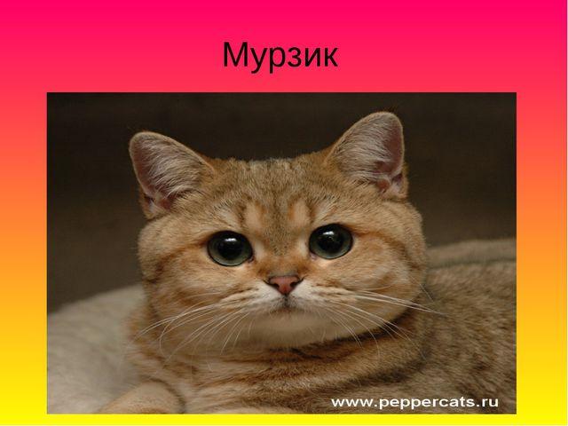 Мурзик