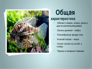 Общая характеристика Обитают в морях, океанх, реках и других различныхводоём