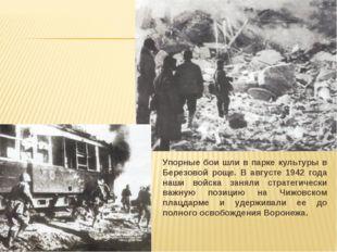 Упорные бои шли в парке культуры в Березовой роще. В августе 1942 года наши в