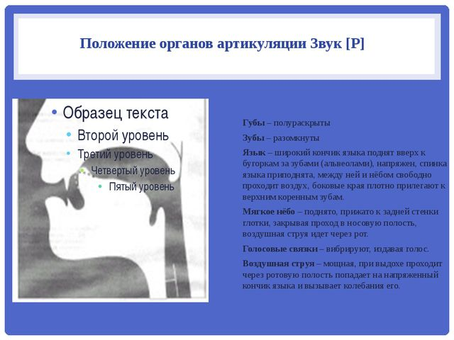 Положение органов артикуляции Звук [Р] Губы – полураскрыты Зубы – разомкнуты...