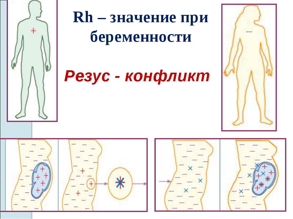 Резус - конфликт Rh – значение при беременности