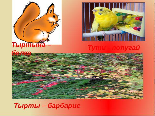 Тырты – барбарис Тыртына – белка Тути - попугай