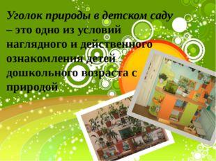 Уголок природы в детском саду – это одно из условий наглядного и действенного