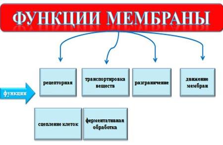 http://festival.1september.ru/articles/647482/img3.jpg
