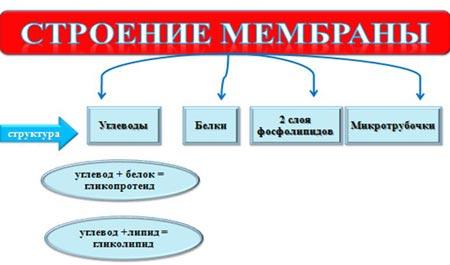 http://festival.1september.ru/articles/647482/img2.jpg
