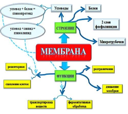 http://festival.1september.ru/articles/647482/img1.jpg