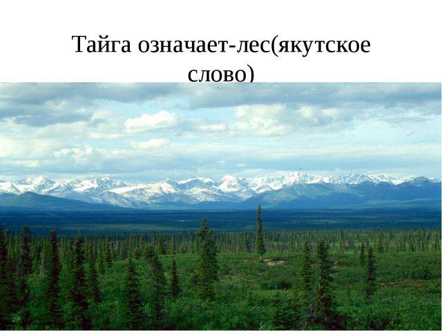 Тайга означает-лес(якутское слово)