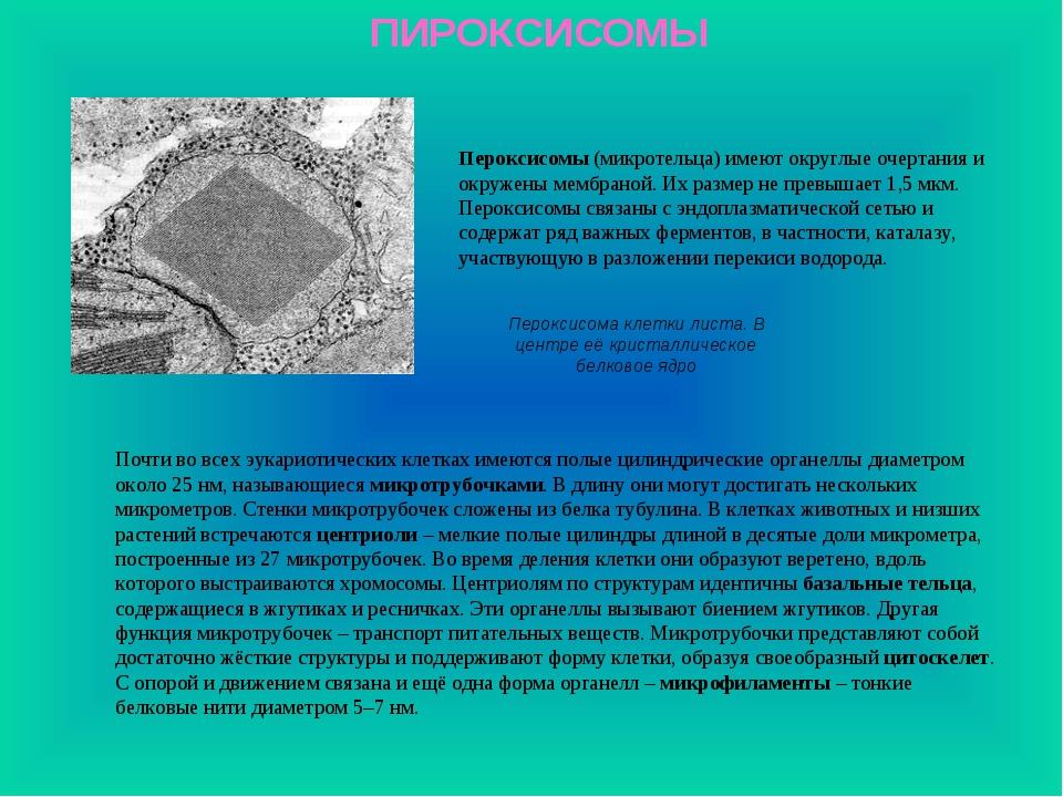 ПИРОКСИСОМЫ Пероксисома клетки листа. В центре её кристаллическое белковое яд...