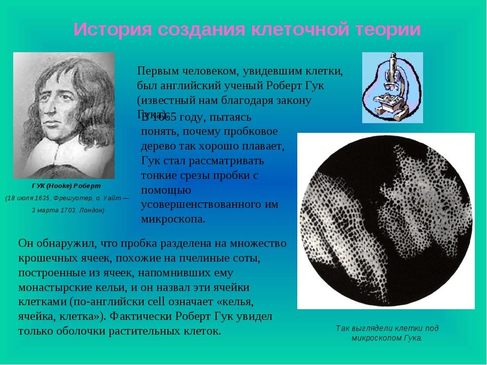 История создания клеточной теории Так выглядели клетки под микроскопом Гука....