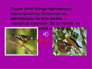 Песня этой птицы напоминает звуки флейты. Встретив ее, запомнишь на всю жизнь