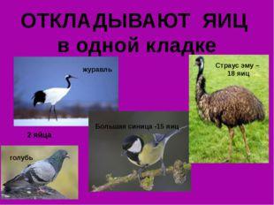 ОТКЛАДЫВАЮТ ЯИЦ в одной кладке 2 яйца журавль голубь Большая синица -15 яиц С