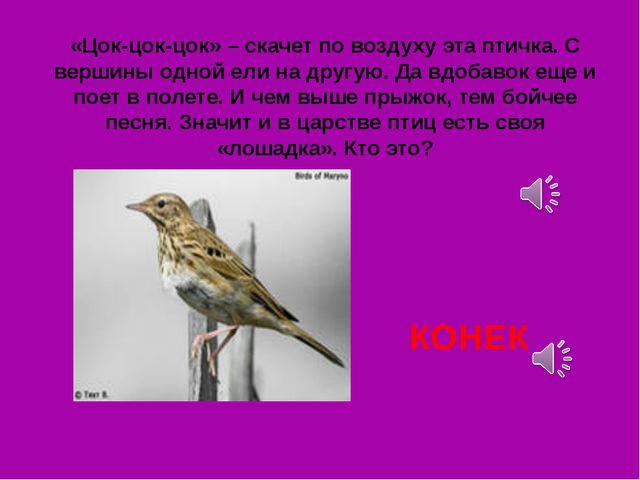 «Цок-цок-цок» – скачет по воздуху эта птичка. С вершины одной ели на другую....