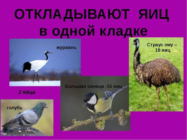 ОТКЛАДЫВАЮТ ЯИЦ в одной кладке 2 яйца журавль голубь Большая синица -15 яиц С...