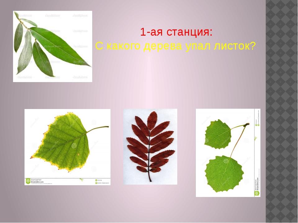 1-ая станция: С какого дерева упал листок?