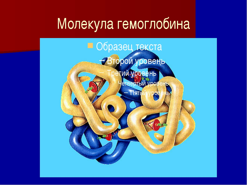 Молекула гемоглобина