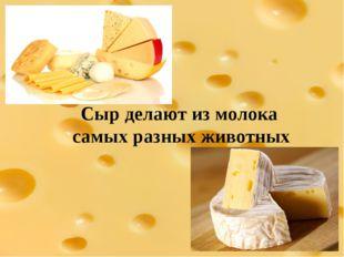 Сыр делают из молока самых разных животных