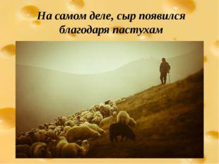 На самом деле, сыр появился благодаря пастухам